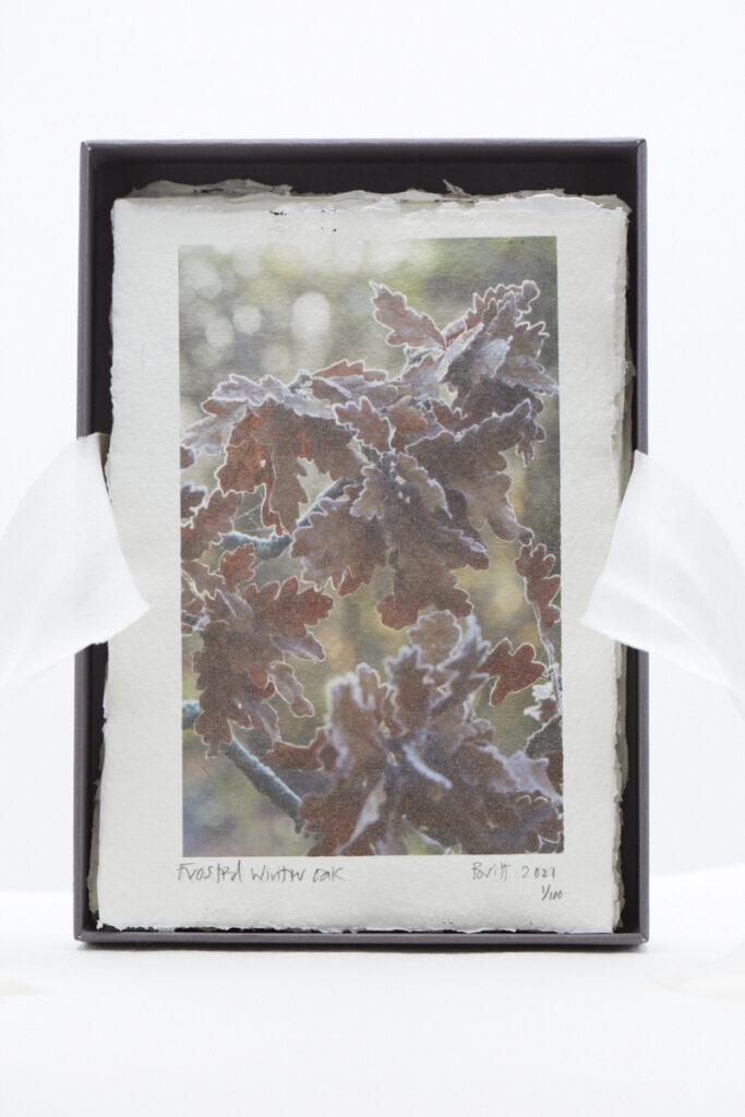 Frosted Winter Oak