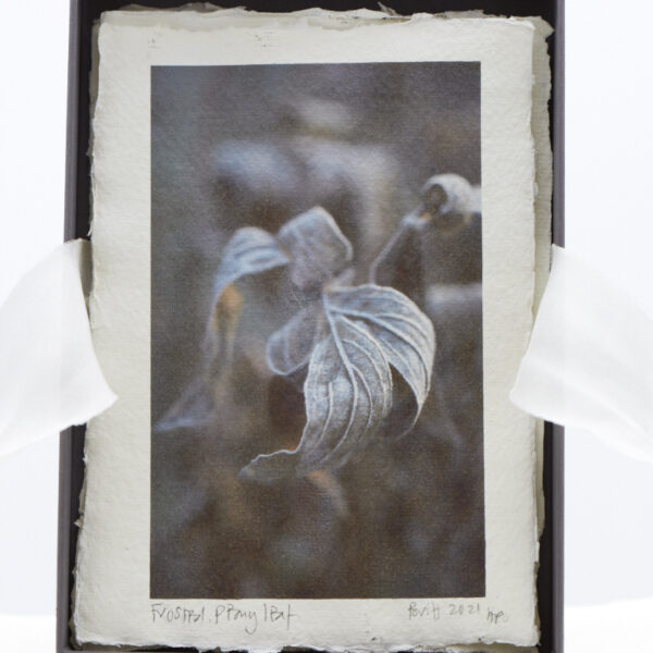 Frosted Peony Leaf