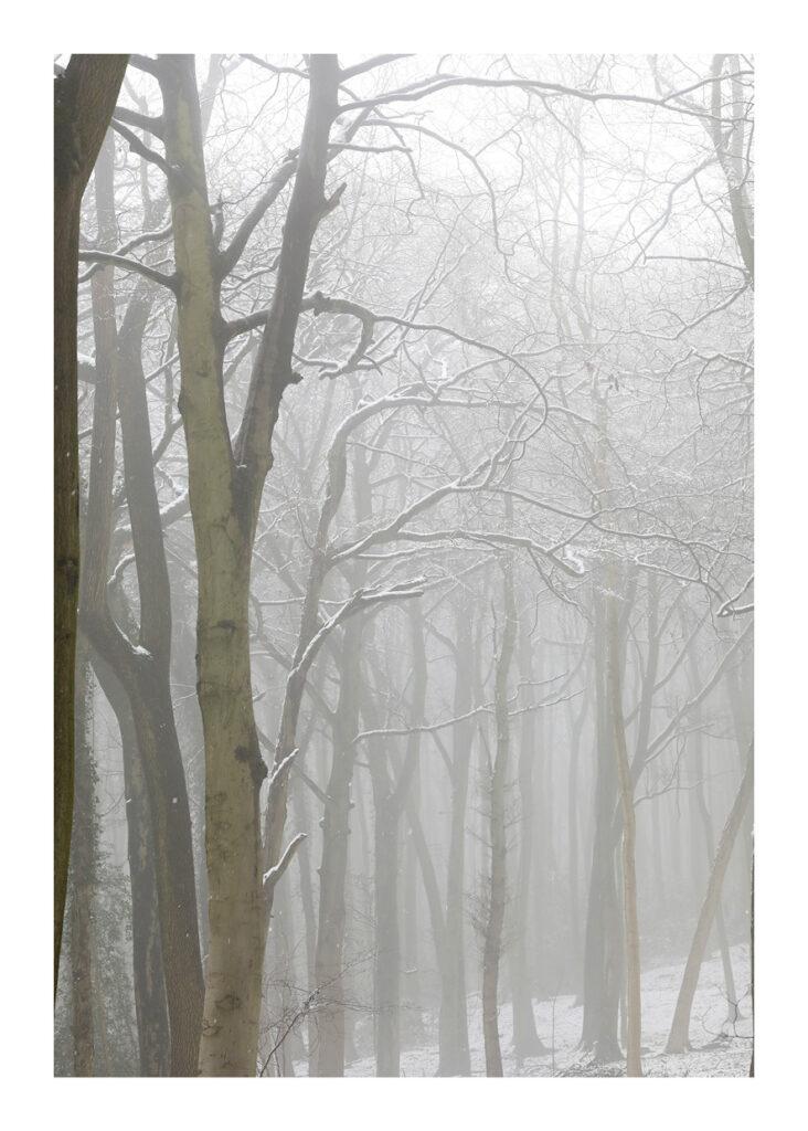 Lightwood V2