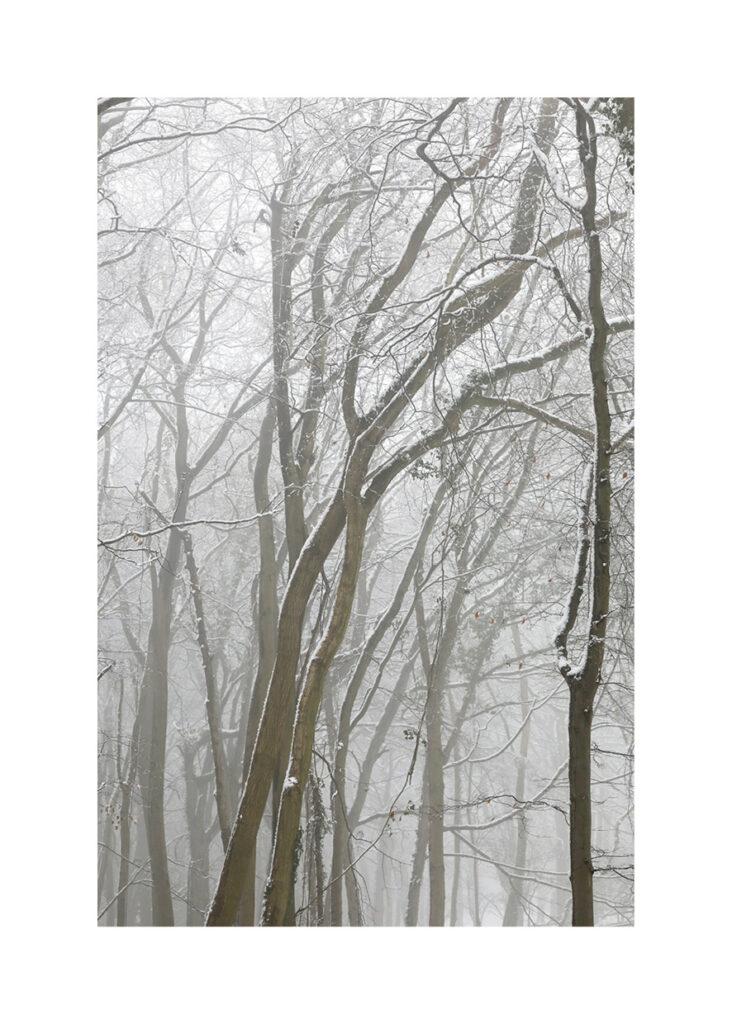 Lightwood V3