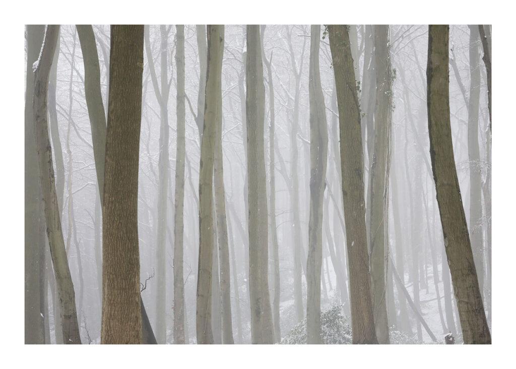 Lightwood V4